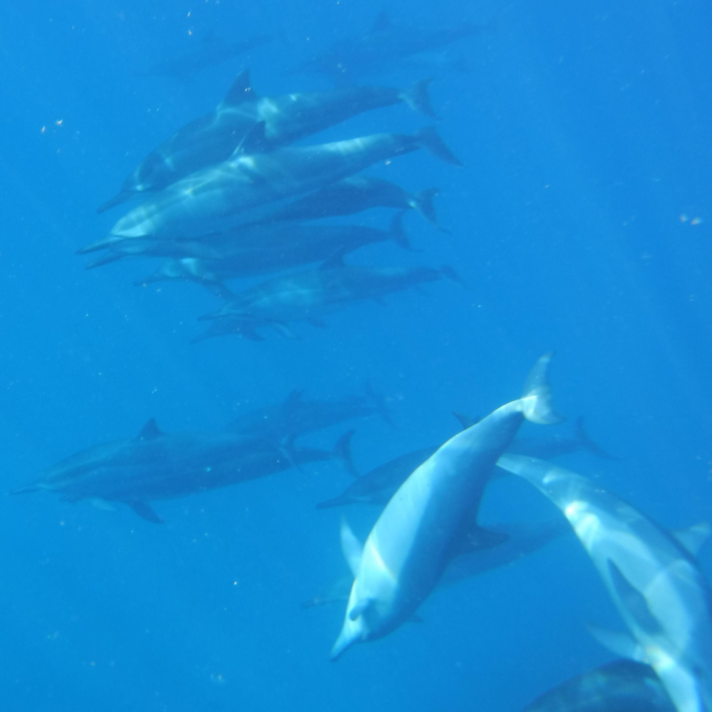dscf0436-dolphingroup-sqcrp