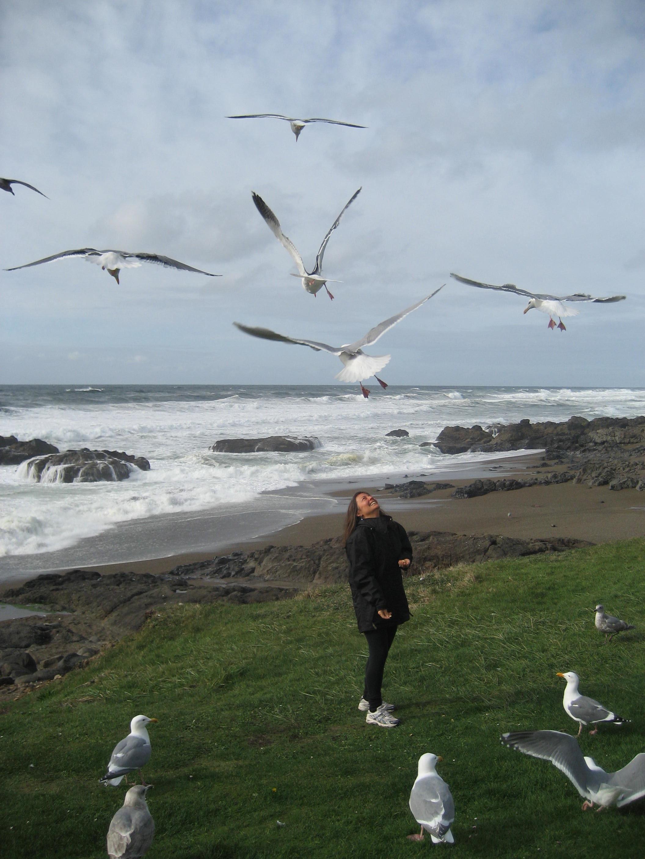 IMG_1229-AdobeSeagulls&Me