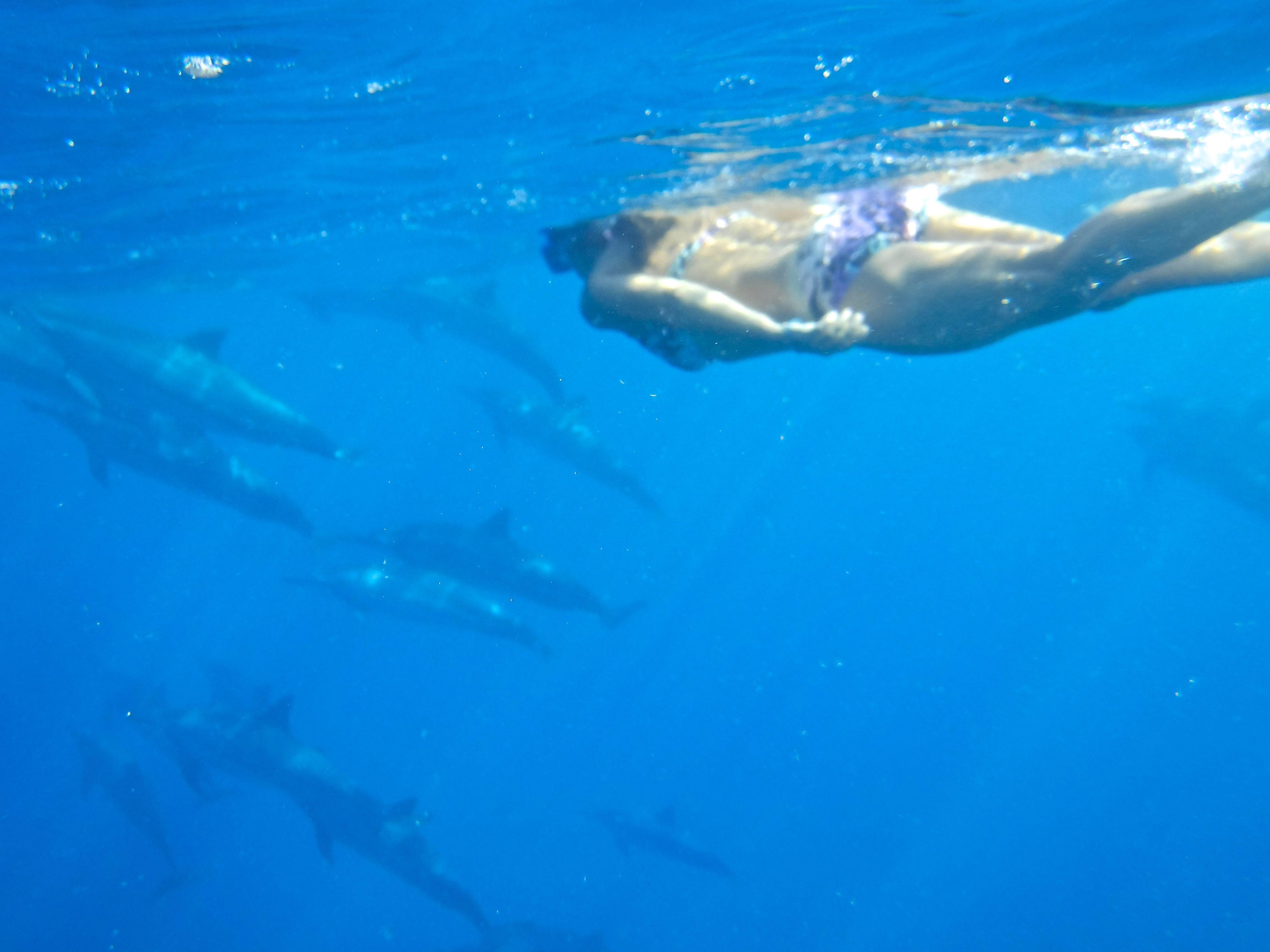 dscf0453-dolphinsme-forblog